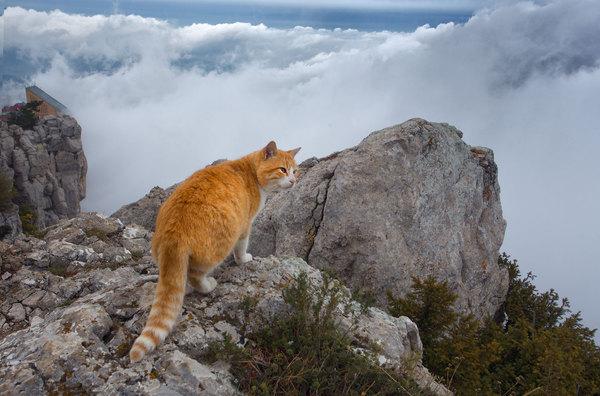 Обитатель Ай-Петри. фотография, пейзаж, Крым, животные, кот