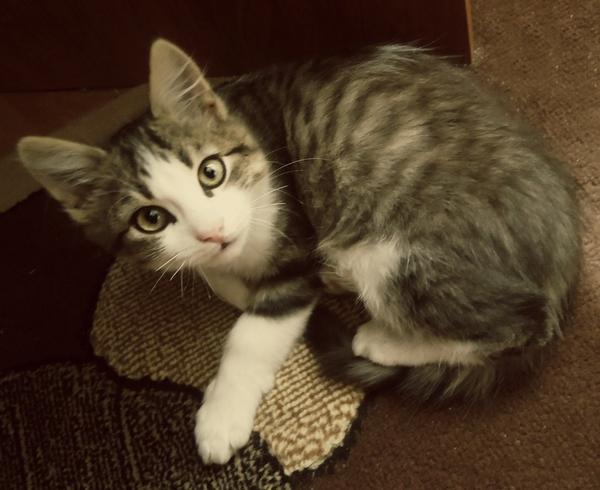 Пушистокот - именинник :3 Кот, Милота, Животные, Длиннопост