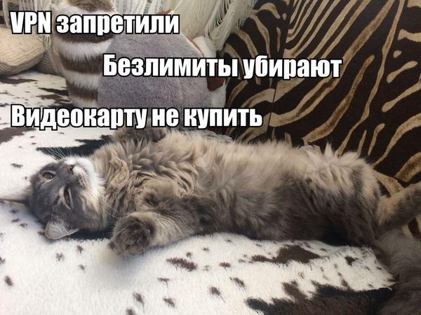 Новостной кот