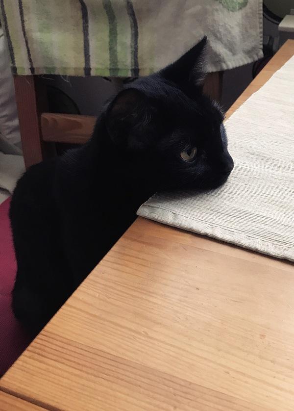 Спят усталые зверюшки... Кот, Черный кот, Длиннопост
