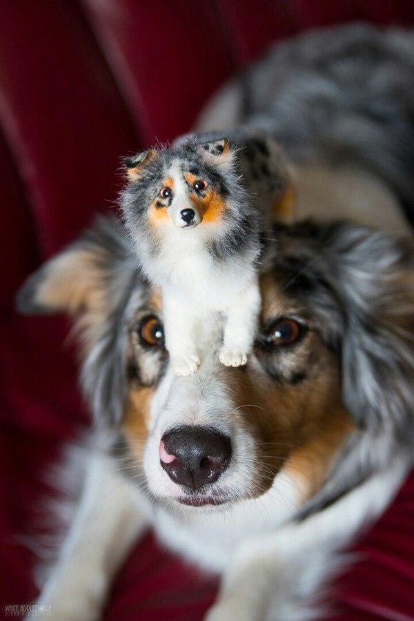 Собака и ее мини копия. Handmade, Рукоделие, Аусси, Австралийская овчарка, Длиннопост, Собака