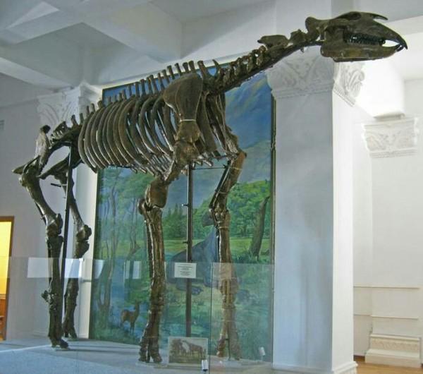 Индрикотерии - самые большие сухопутные млекопитающие Индрикотерий, Палеонтология, Доисторические животные, Длиннопост