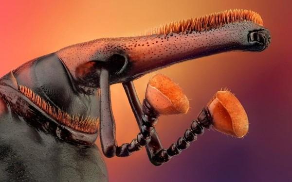 Красный пальмовый долгоносик защитит тебя от всех невзгод