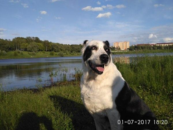 Сходили на озеро:) фотография, Алабай, Борисоглебское озеро, Собака, длиннопост