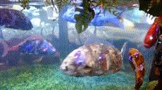 Рыбы роботы из Японии