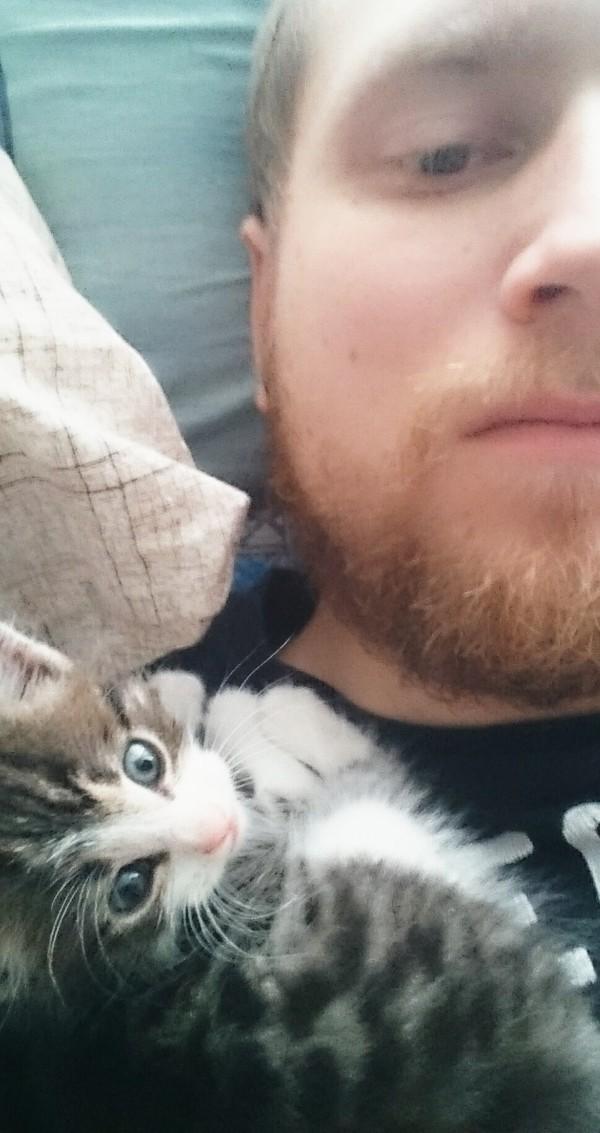Крошечный байкер котенок найденыш, бездомное животное, кот, гараж, длиннопост