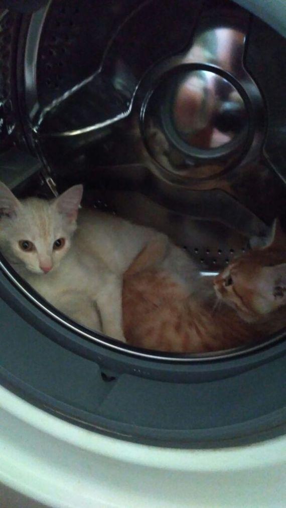 Осторожно, не стирать. кот, стиральная машина, длиннопост