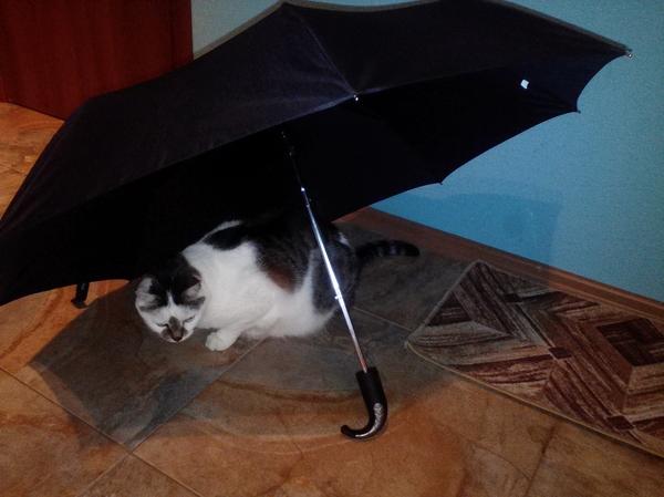 Ловушка для кота (работает на сто процентов)