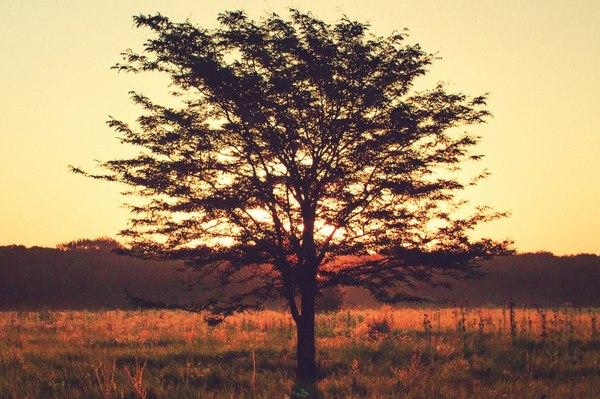 Рассвет в Новокубанске, Краснодарский край хочу критики, лето, рассвет, Природа, фотография, Кубань, Краснодарский Край
