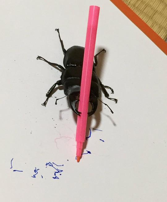 Вроде ты жук, но в душе художник. Жуки, Фломастер, Каляки-Маляки