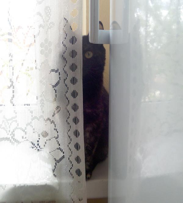 Cat камера наблюдения