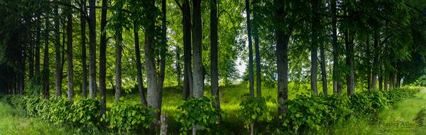 Зелёная стена featheratlas, природа, пейзаж, деревья, лето, панорама