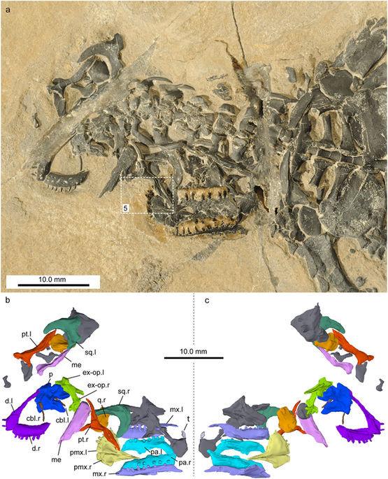 Палеонтологи обнаружили в Альпах скелет древней рептилии Палеонтология, Наука, Раскопки, Длиннопост
