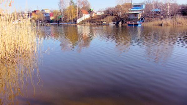 Природа)) природа, весна, мои фото, моменты жизни, Муравьи, Река