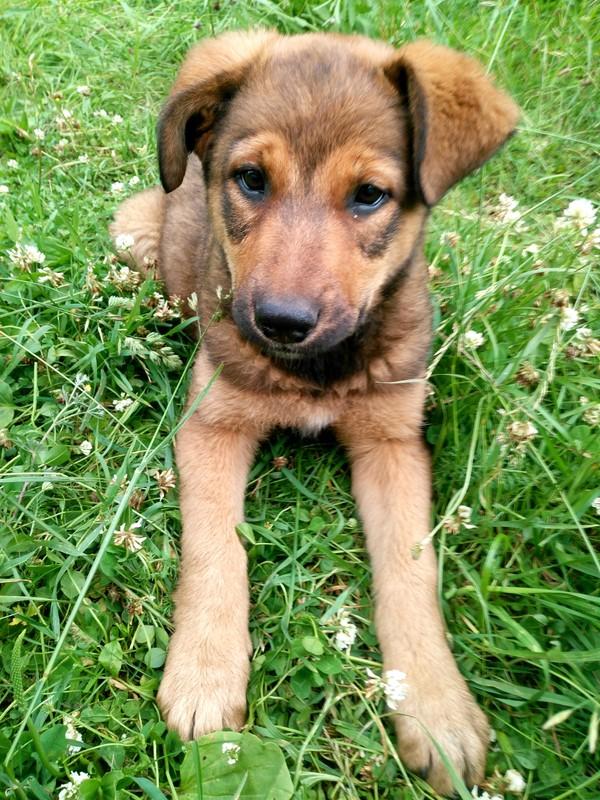 Соня ищет семью. собака, найденыш, самка, ищу дом, длиннопост, Помощь
