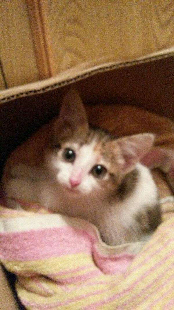 Комочек счастья хочет домой!! Помощь, кот, добрые ручки, Срочно!!!!, Иначе умрет, Тепло добро и мимими, длиннопост