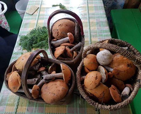 Сезон открыт Урал, грибы