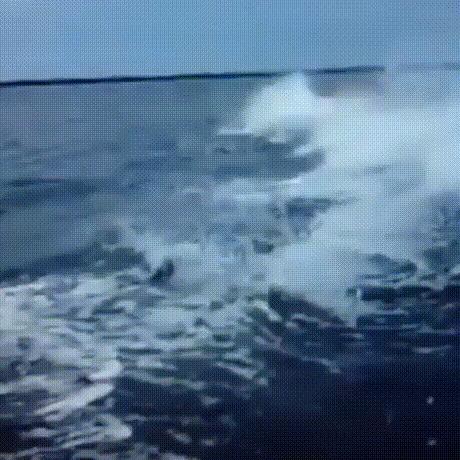 Дикие дельфины в естественной среде обитания