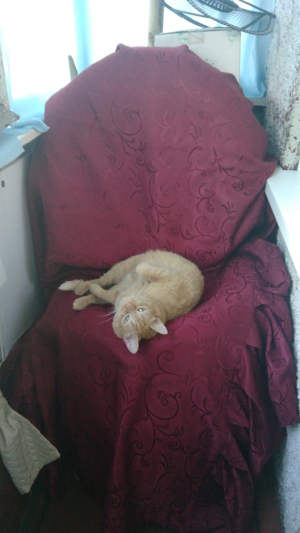 """Балконное """"кресло"""". балкон, кресло, кот, хенд-мэйд, шины, Наглость"""