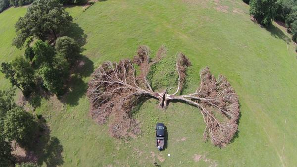 Дерево, в которое попала молния. Восточный Техас