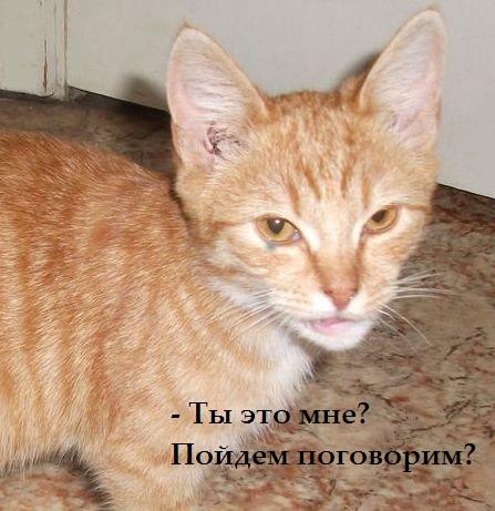 Как кот нашел своих хозяев