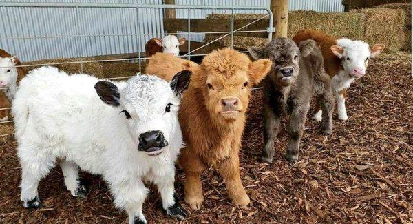 Банда бычков