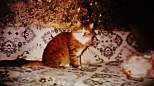Киса жизнь, Детство, лучший друг, детство 90-х, семья, длиннопост, кот