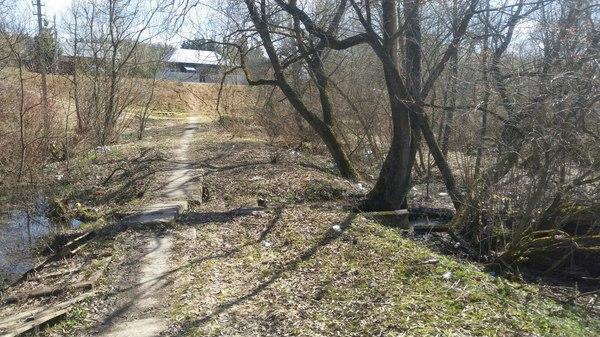Фото ссущих в лесу фото фото 489-104