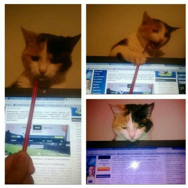 Периферийное устройство трехцветная кошка, устройство, кот