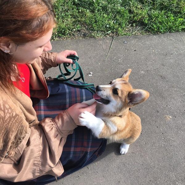 Мой пёс Дюк Собака, Первый пост, корги, длиннопост