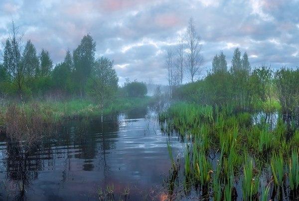 Ленинградская область Ленинградская область, май, фотография, Природа, пейзаж, прохлада, длиннопост