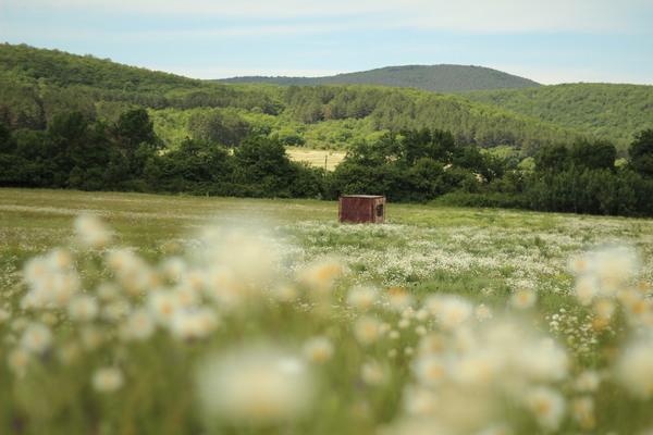 Июньские ромашки ромашки, цветы, поляна, фотография, длиннопост