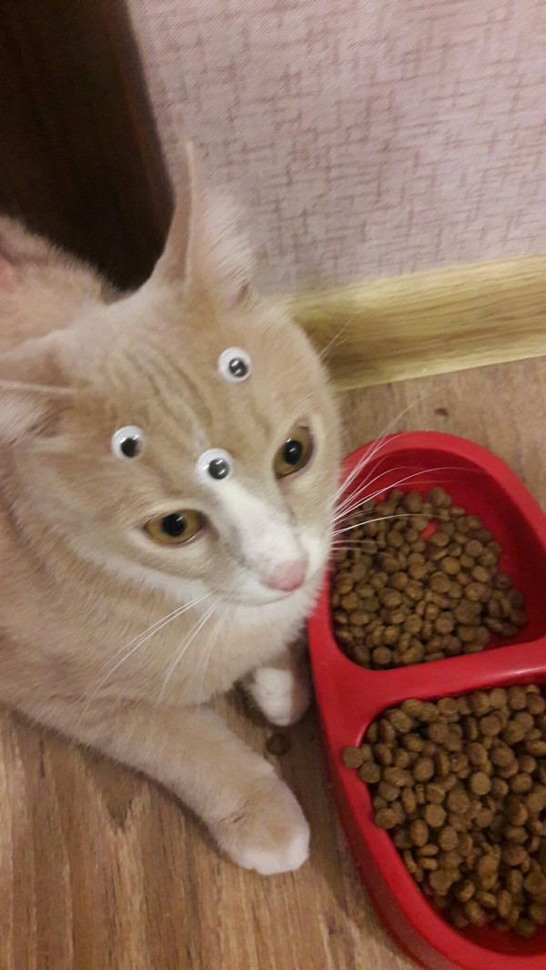 Передача про котов на рен тв