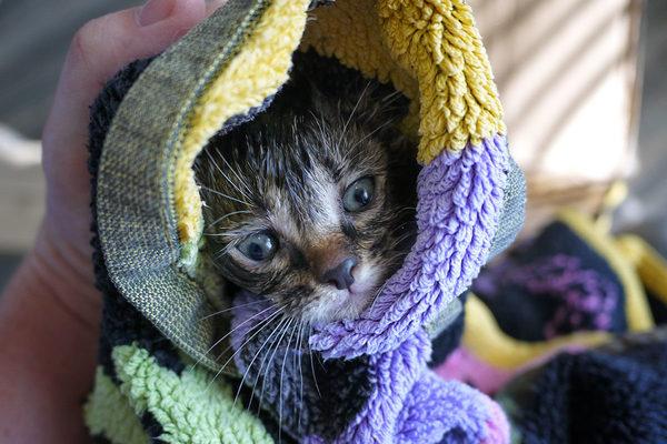 Найденыш (хозяин не требуется))) кот, найденыш, добро и зло, длиннопост
