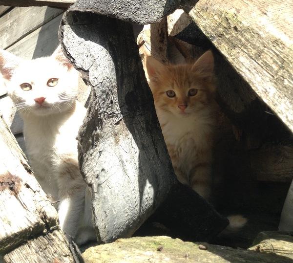 Кошачье  семейство. Кот, Питомец, Животные, Фотография, Деревня, Кошки и котята, Котомафия, Длиннопост