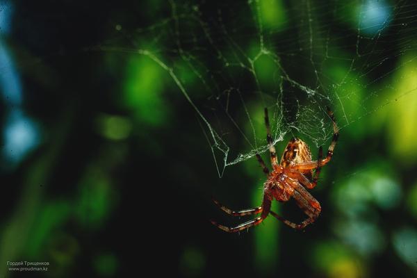 Лето, жара, насекомые макро, фотография, nikon, sigma, уральск, казахстан, дача, паук, длиннопост