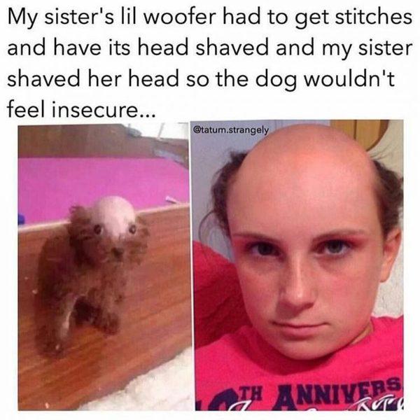 Собачке сестры нужно было наложить швы и её для этого малость побрили юмор, бритье, глупость