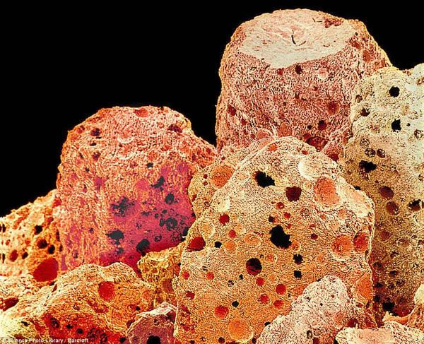 Под микроскопом Кофе, Кофеин, Трипофобия, Бариста, Микроскоп, Макро, Длиннопост
