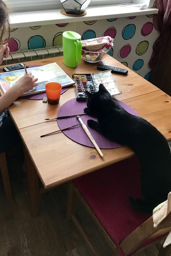 Любопытная Варвара :) Кот, Черный кот, Длиннопост