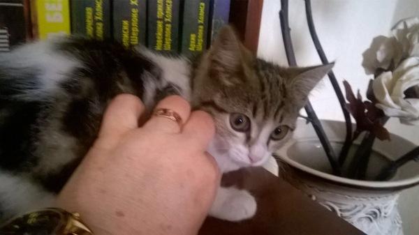 Приютите сироту кот, котенок ищет семью, подобрыш, длиннопост
