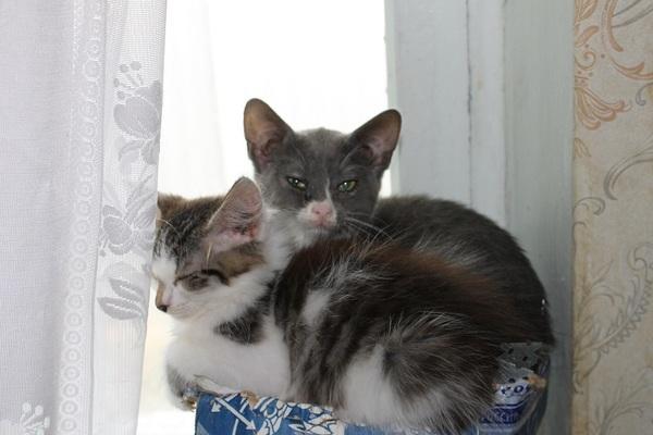 """Мой личный """"Котоленд"""" 85 кот, приют, Липецк, помощь, добро, котоленд, длиннопост"""