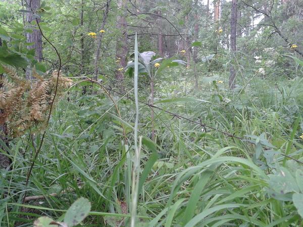Растяжка из колючей проволоки в лесу. Лес, Тайга, Колючая проволока, Невезение