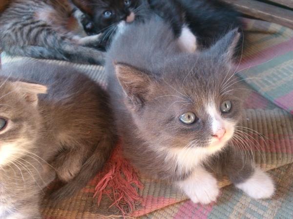 Энгельс-Саратов. Ищем новый дом. кот, отдам в хорошие руки, сила пикабу, Лига Добра, домашние животные, Саратов, Энгельс, длиннопост