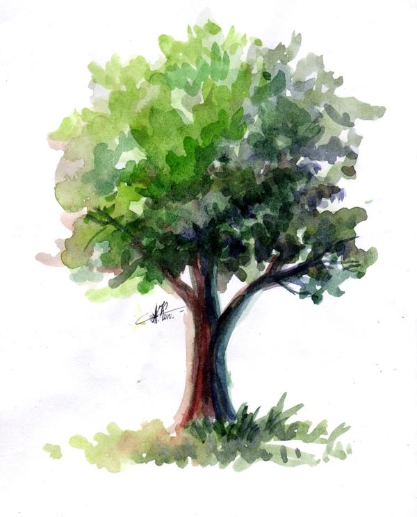 15 минутное, просто дерево.