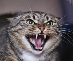 Злющий кот Кот, Самый злой кот, Кот-Охранник, Видео
