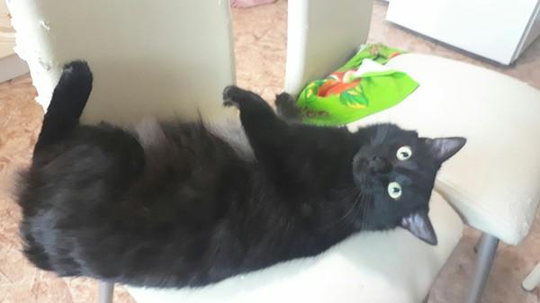 Тут ведь любят котеек?)) Кот, Стул