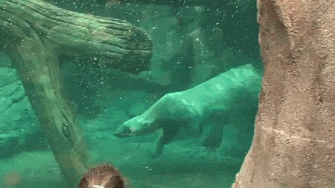 Медведь помогает другу выбраться на сушу