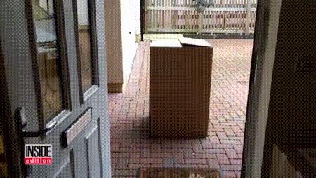 Собака получила особую посылку :) Собака, Коробка, Сюрприз, Милота, Гифка