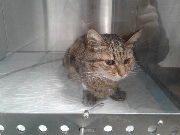 Ура, нашелся донор для кошки! кровь, кот, помощь животным, ветеринария