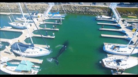 Заблудившийся горбатый кит